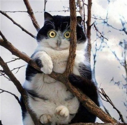 快下来抓老鼠去!!没事,你躲树上装什么猫头鹰啊!!!