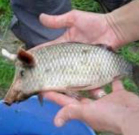哎!看这条鱼长的,对得起它爹吗?