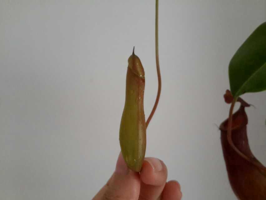 植物植物,你邪恶了哦。