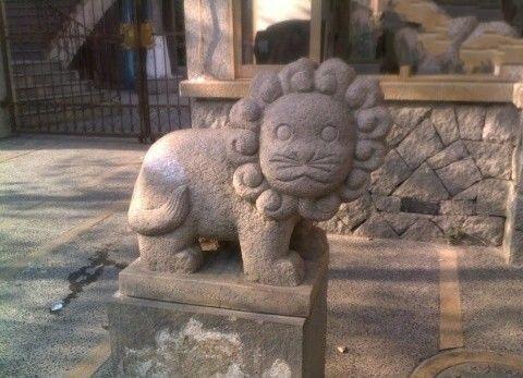最萌的狮子,怎么感觉有点邪恶呢!