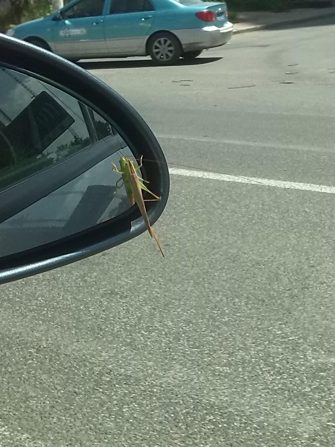 小虫你居然搭顺风车……