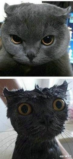 洗了个澡气势全无。怎么还嫌我字少