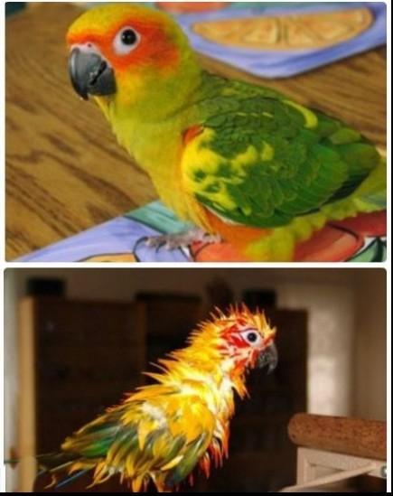鹦鹉洗了个澡