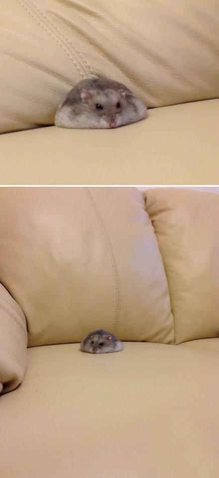 这鼠标,你见过吗∩__∩