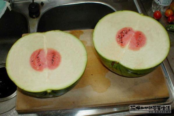 今天买了个西瓜。 三楼怎么看?