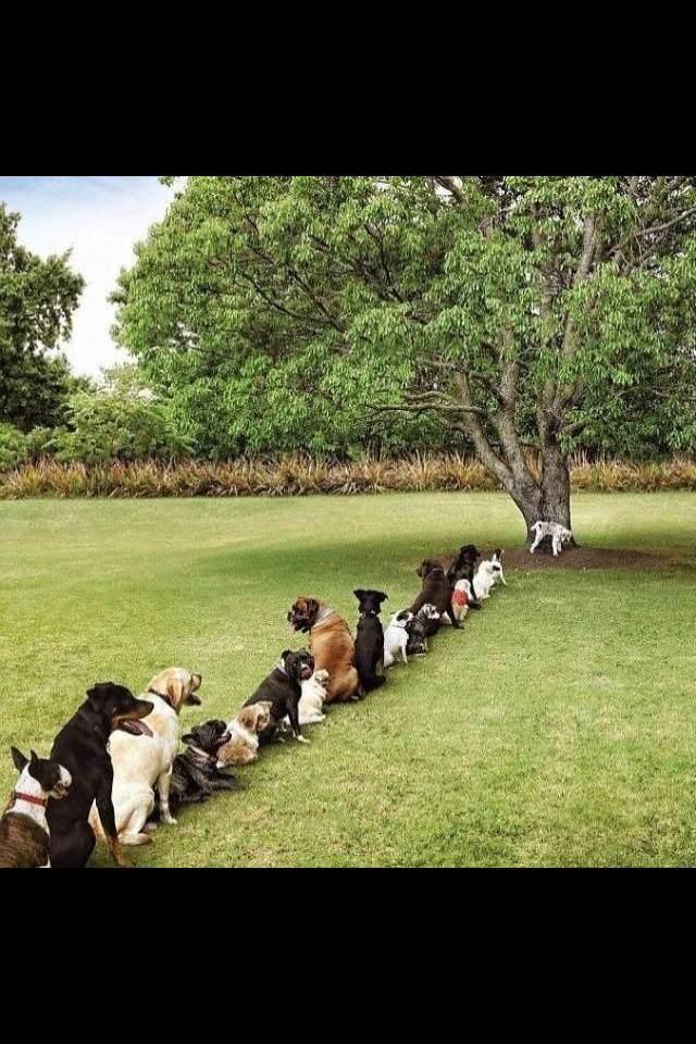 树都被砍去作沉香了!狗狗们都在排队上厕所了。