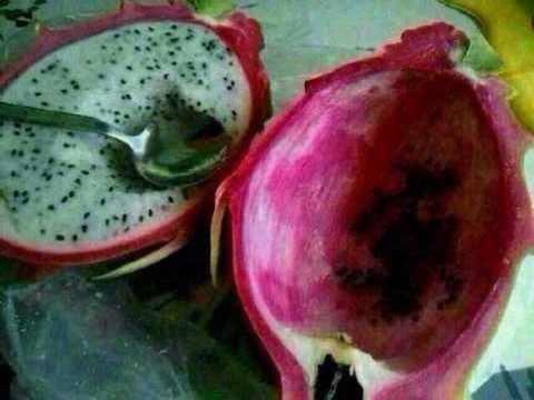 这什么水果阿 味道挺好 吐籽吐半天了 俩字 麻烦