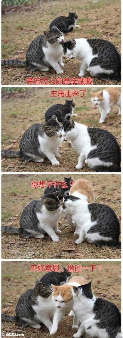 猫爷教你怎么去拆情侣   =  ■ =