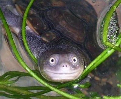 好萌的乌龟