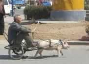 大爷您坐骑太拉风了吧。