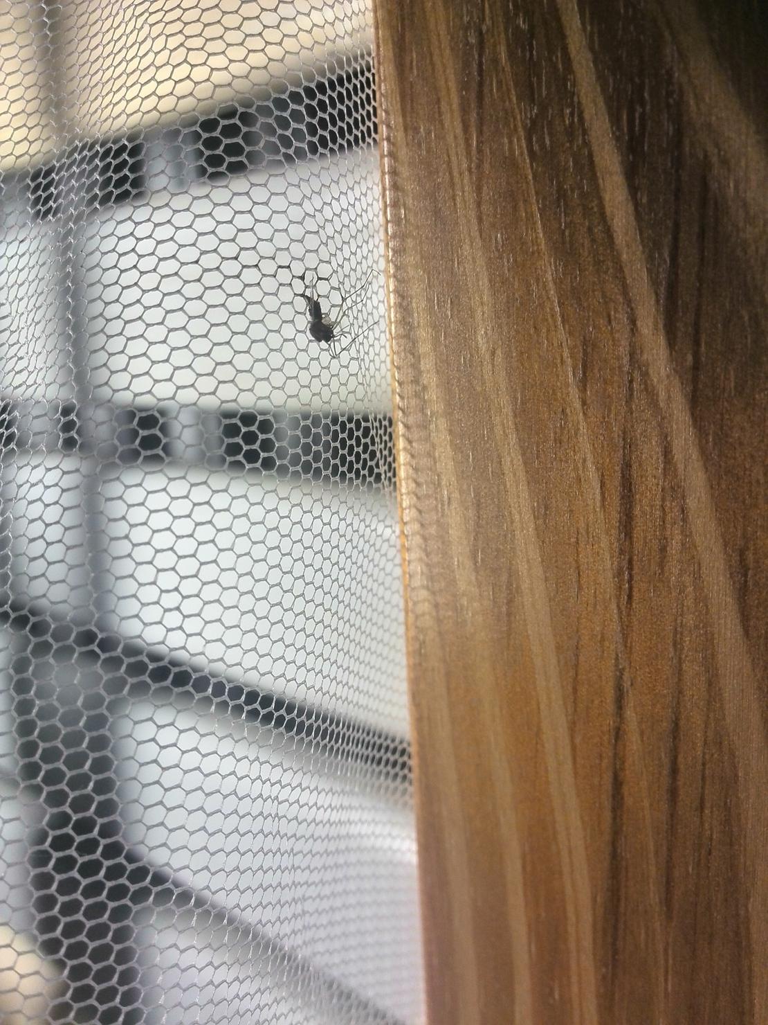 这只蚊子在我蚊帐上挤死了…我不知道该说什么好了…