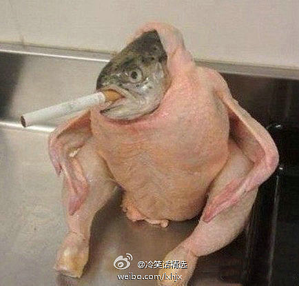 冷丝们,借个火。这个鱼头不太熟。