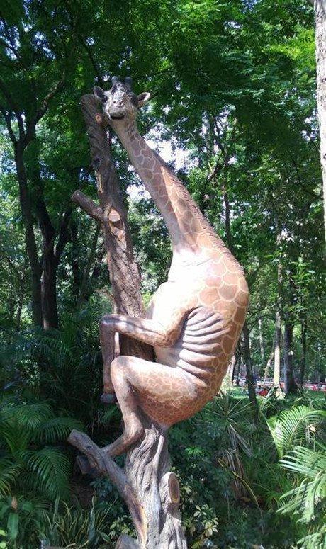 瞅什么瞅,没见过长颈鹿上树啊!