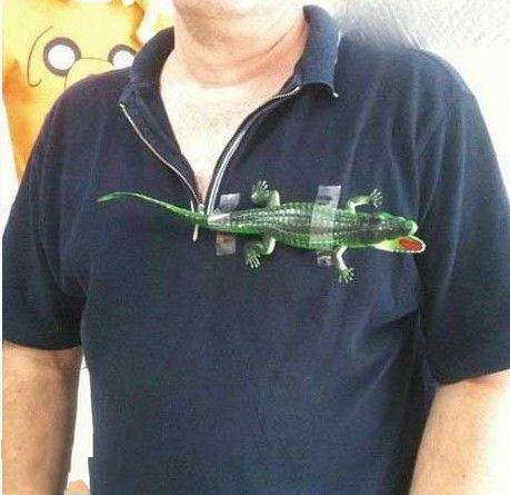 新买的鳄鱼T恤