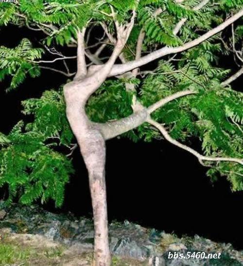 多美丽的树.....呵呵呵!!!