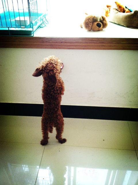 把安安最爱的玩具狗放阳台,然后他站在这里跳阿跳阿跳,已经70多下,还在跳。。。。