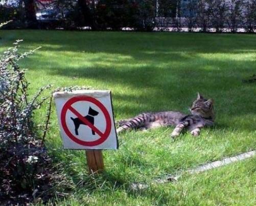 一个禁止汪星人的草地真是舒服啊