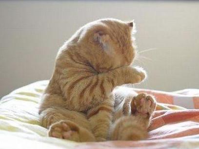 摸猫脸的惨痛收场,可是喵喵那欲拒还迎的神态是肿莫回事啊噗~
