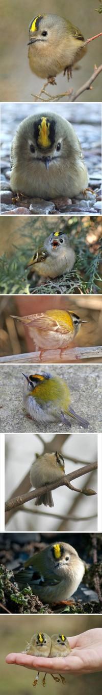 愤怒的小鸟?