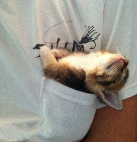 这只猫咪叫Audrey,小小的,总爱这样在我室友口袋里睡觉。