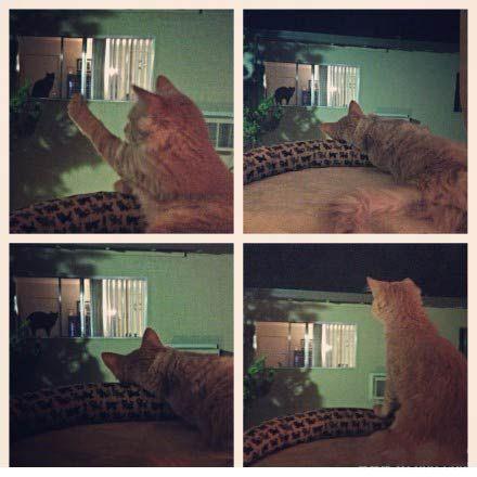 我家的猫猫好像爱上了对面的喵