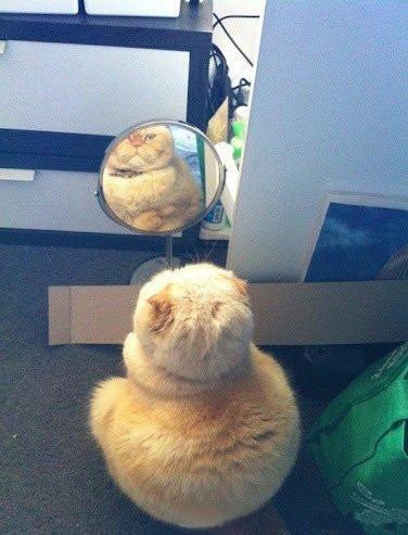 一定是镜子坏掉了,一定是镜子坏掉了,一定是镜子坏掉了,嗯!!肯定是镜子坏掉了。