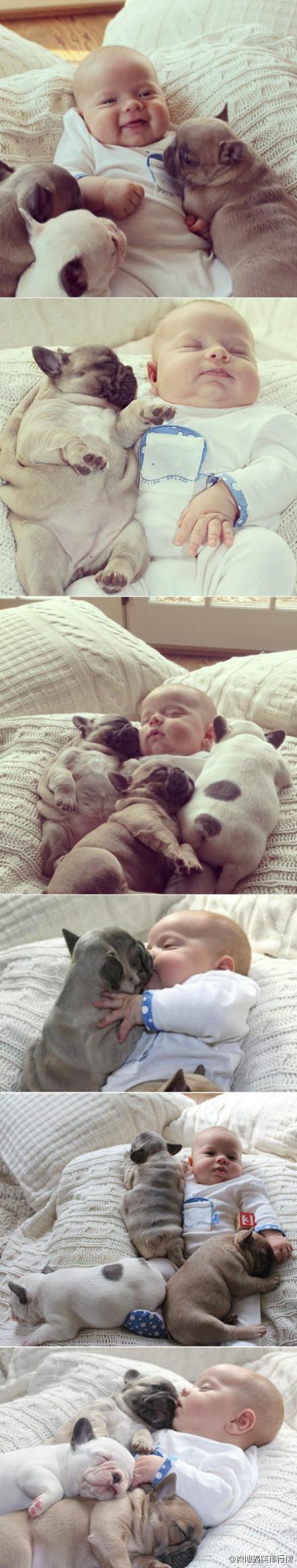 美国宾州一名女子将侄子和法国斗牛犬的合照上传到网络上,小宝宝和小狗的可爱萌样让许多人直呼受不了。