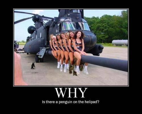 为什么企鹅会在这里?