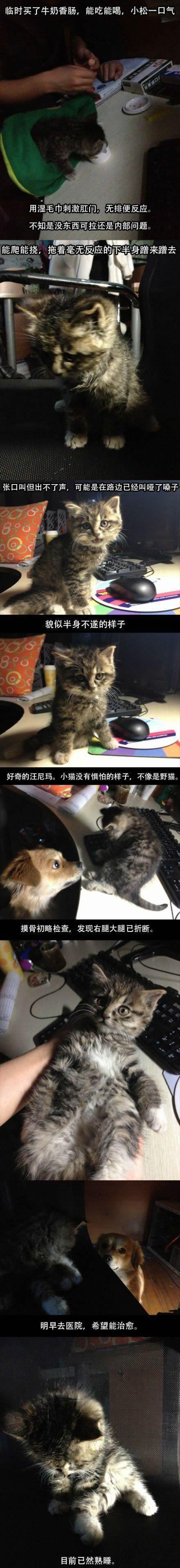 回家路上捡到一只猫