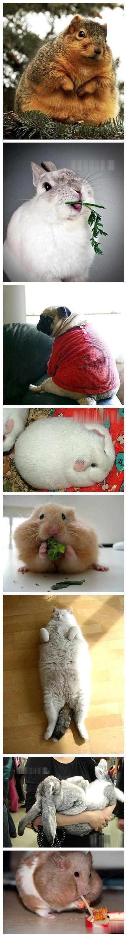 原来胖子遍布各个物种