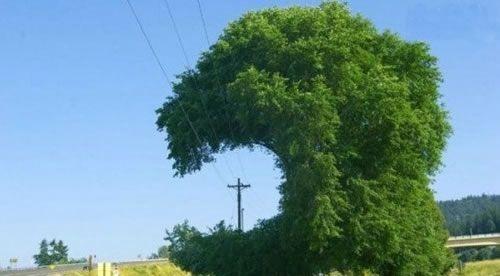 为了电线把树修剪成这样了