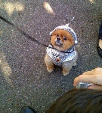 别人手牵手,我牵我的狗,走一走 游一游,看谁不爽咬两口!