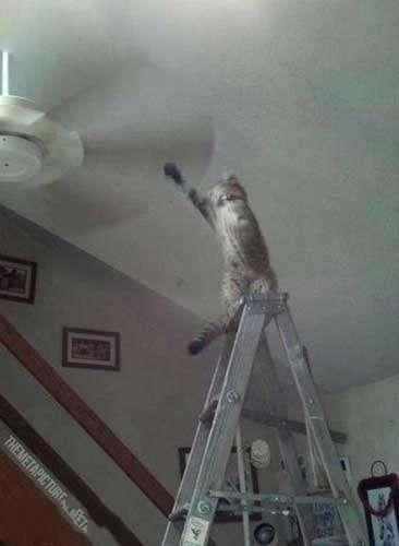 好奇害死猫啊!