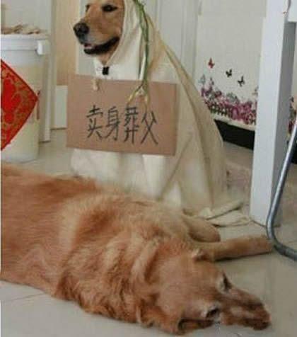 狗都这么孝顺,那我们……