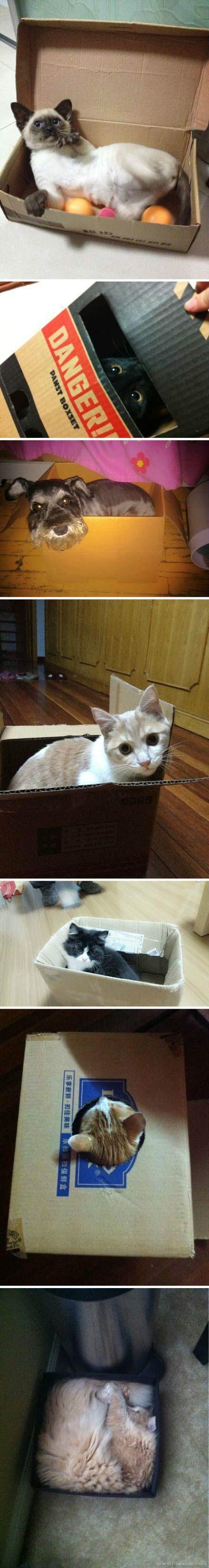 据说只要放个盒子,猫就会钻进去