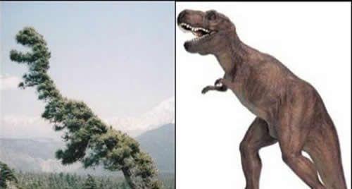难道这个松树下面埋了一个恐龙?