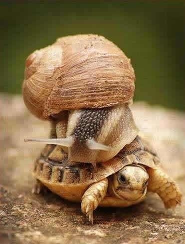 开上跑车的蜗牛