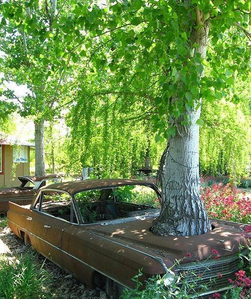 这车有多少年了?