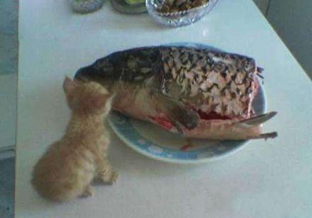 这鱼大了点,让我从哪下嘴啊!