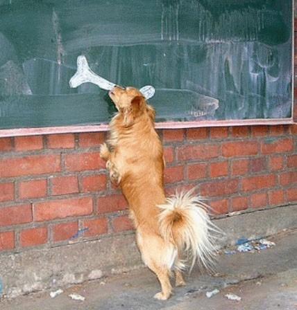 看样子狗不仅靠鼻子,形状像也行啊