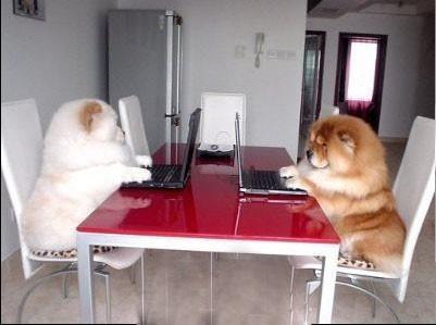 你好,我们是程序猿