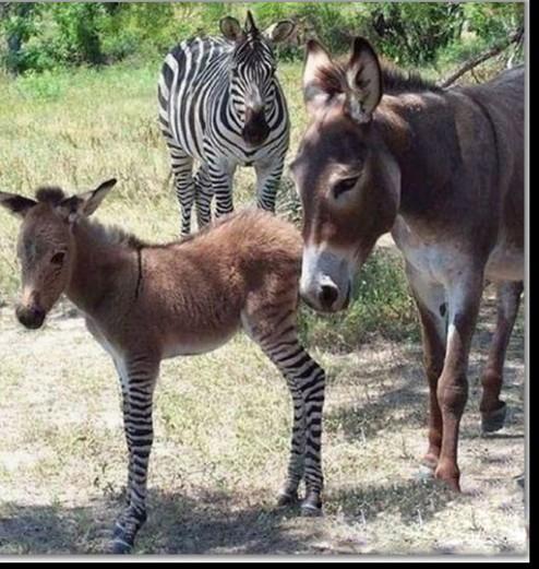 驴啊,你跟谁都能生