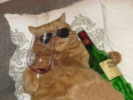 来越南提肥猫,没人敢惹你