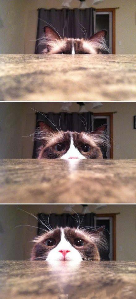 一只在看恐怖片的猫