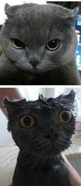 一点水就可以浇熄猫的气势
