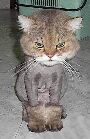 猫咪过生日,送了它一双UGG