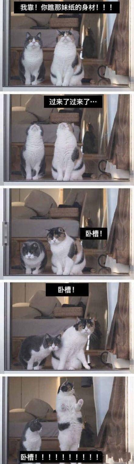 没见过世面的猫咪