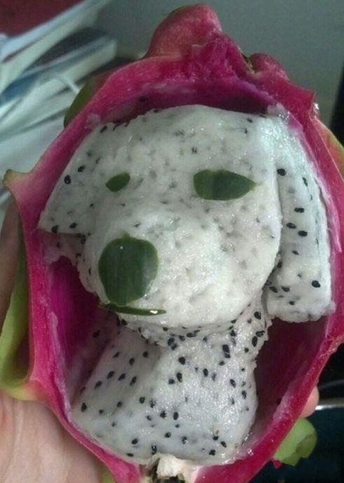 火龙果里面的狗宝宝