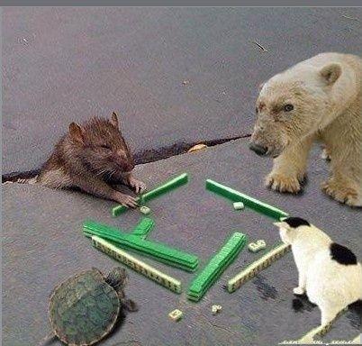 快出牌,比龟还慢