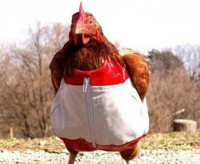 又不让吃鸡!又不让吃鸡!又不让吃鸡!有点事就不让吃鸡!丢不丢人!丢不丢鸡!你让鸭怎么看鸡?让大鹅怎么看鸡?让鸡今后在家禽界怎么混?有流感就让人吃板蓝根,板蓝根,板蓝根!为什么不直接给鸡吃板蓝根!!!!